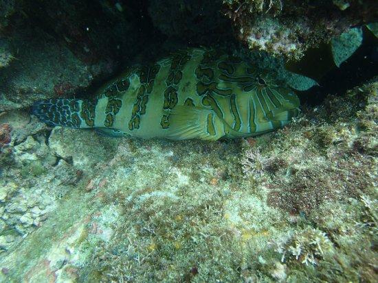 Playa Ocotal, Costa Rica: Grumpy fish hiding!