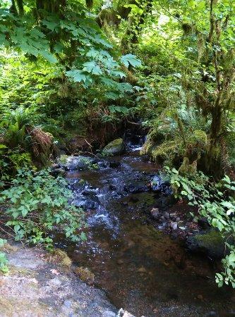 Тилламук, Орегон: IMG_20160716_184911_large.jpg