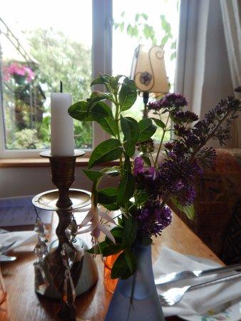 Castlemaine, Ireland: Lovely wild flowers