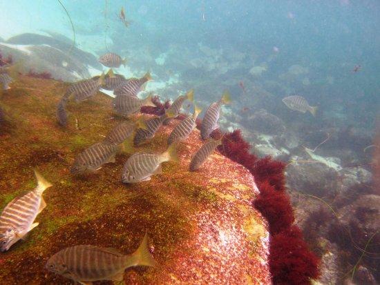 Scuba San Diego: Snorkeling at La Jolla Cove