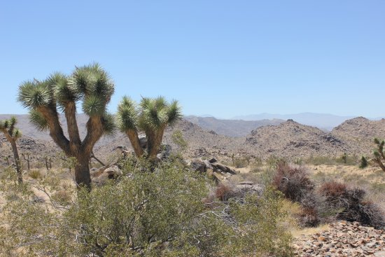 Twentynine Palms Photo