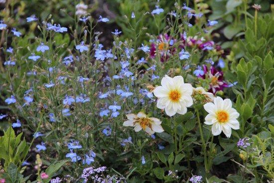 Lehi, UT: Ashton Gardens
