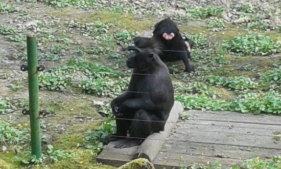 Zoo Decin
