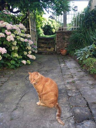 Saint-Pierre-du-Lorouer, France : George le Chat dans le jardin !