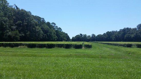 Wadmalaw Island, Carolina Selatan: 20160719_131029_large.jpg