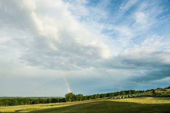 Branchport, NY: Rainbow over the vineyards.