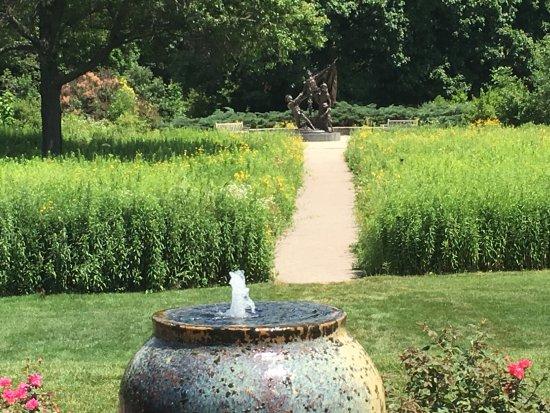 Wheaton, IL: wild flower field