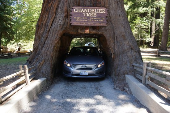 Lake behind gift store - Picture of Chandelier Drive-Through Tree ...