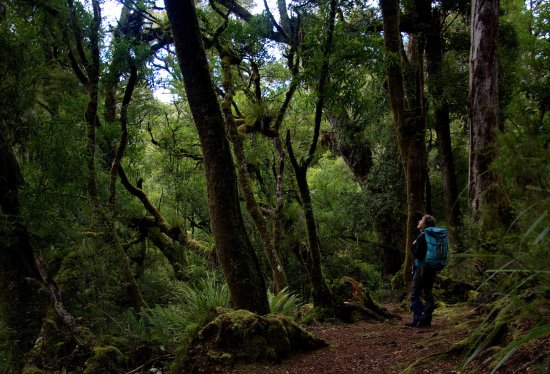 Rangiora, Nueva Zelanda: Be awed by ancient forest