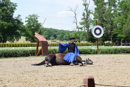 Годолло, Венгрия: More horsemanship
