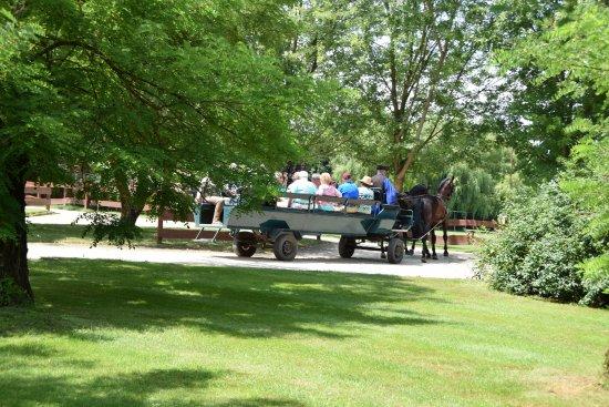 Годолло, Венгрия: Wagon ride.