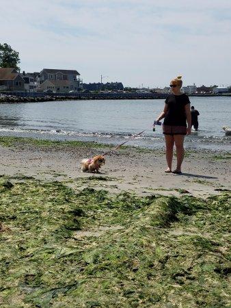 Manasquan, Nueva Jersey: Holy Seaweed !!