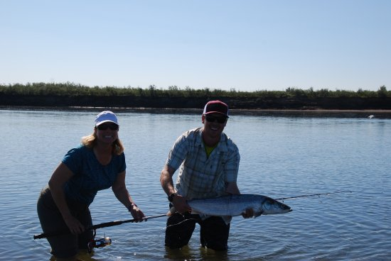 Kotzebue, AK: Catching a sheefish on the Kobuk (thanks to Tim our guide!)
