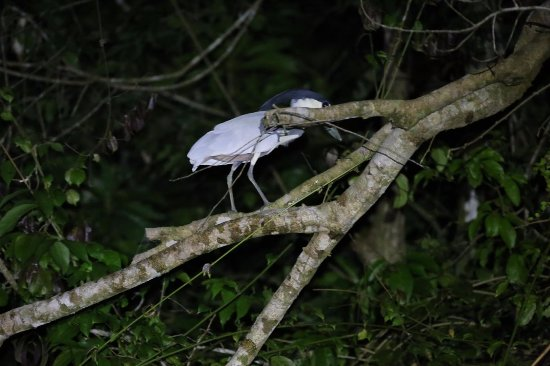 Curassow Amazon Lodge: During one of the excursions