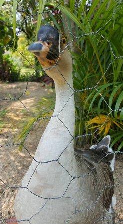 El Tuito, Messico: Nuestra mascota