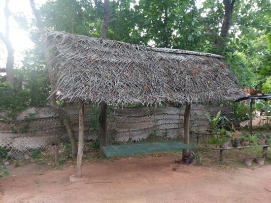 Nilmini Lodge: IMAG0617_large.jpg