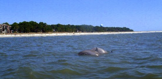 Hilton Head Island Bike Trails Veiw Of South Beach With Dolphins