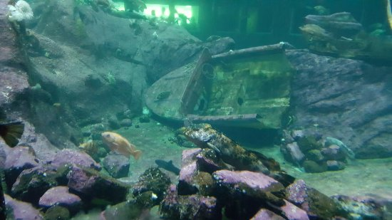 Point Defiance Zoo & Aquarium: 20160719_113931_large.jpg
