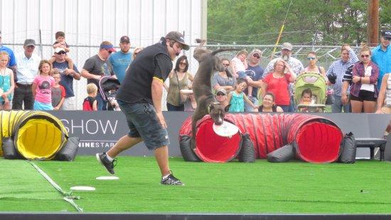 West Fargo, Dakota del Norte: Dog show