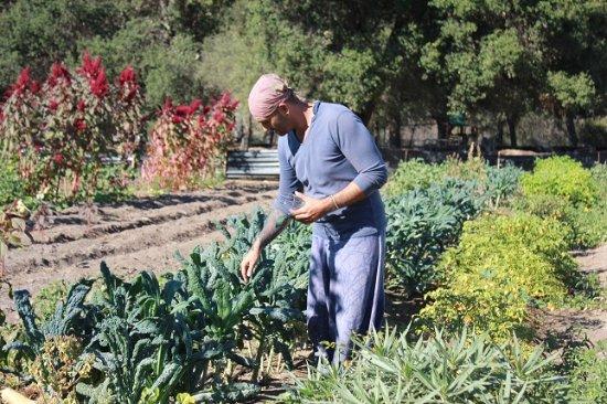 Epicurean San Diego: Farmer David At Terra Madre Gardens