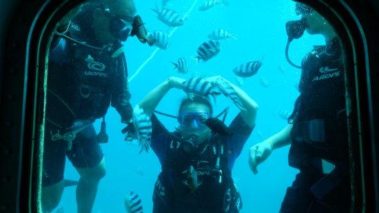 Piti, Mariana Islands: 可以跟外面潛水的人互動