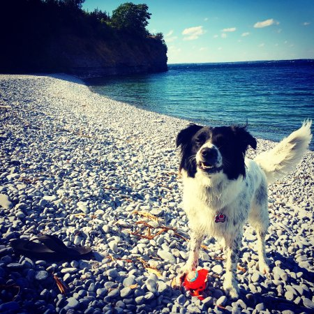 Prince Edward County, Canada: Dogs love it!