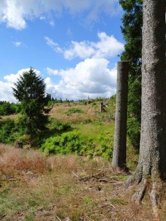 Bad Berleburg, Tyskland: Weite Offenflächen entland des Weges durch den Wisent-Wald