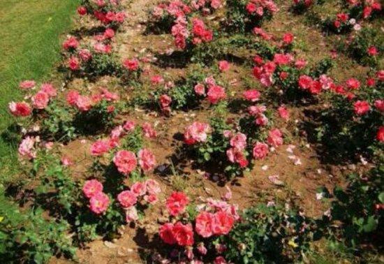 Chandigarh Rose Garden: Screenshot_2016-07-20-11-14-09_com_large.jpg
