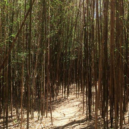 Fantastic Umbrella Factory: Bamboo forest