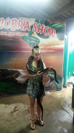 Wichit, Tailandia: Excited with snake show.