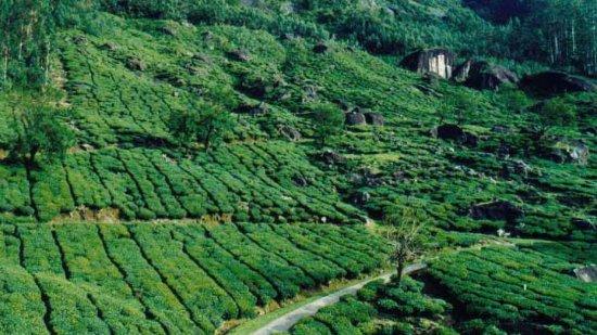 Idukki, India: Pullumedu