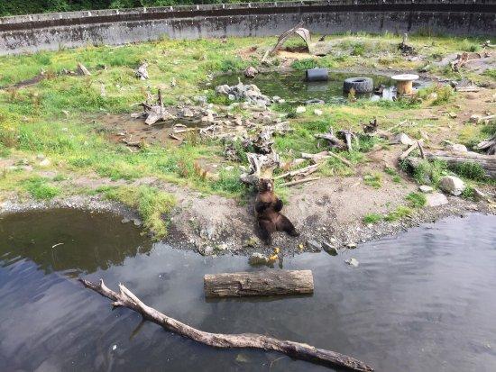Sitka, AK: photo0.jpg