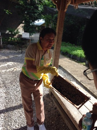 Bohol Bee Farm: photo8.jpg