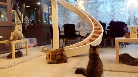 Beau Purr Cat Cafe Club: Cat Staircase