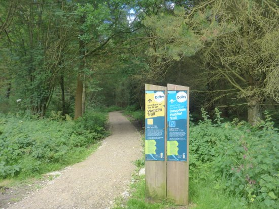Pickering, UK: Loads of Forest Hiking Trails