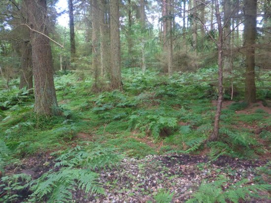 Pickering, UK: Walking in the Forest