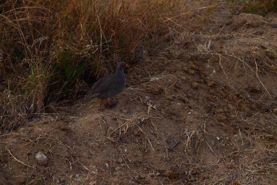 Hwange National Park, Zimbabwe : Bird...