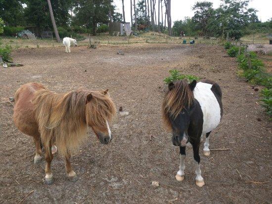 Centre Equestre Biscarosse Laouadie