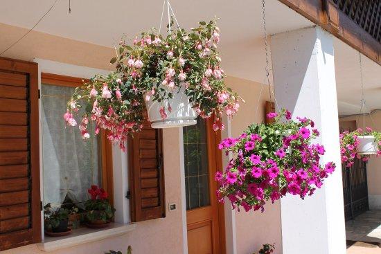 Trichiana, Italia: fiori