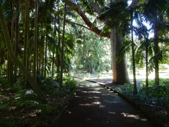 Jose do Canto Botanical Garden