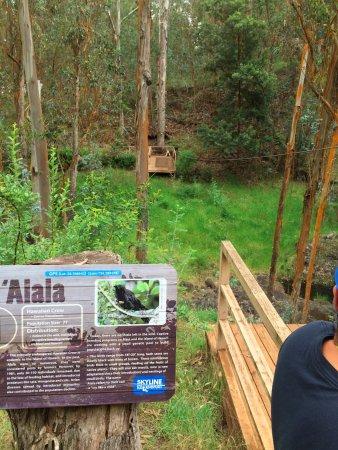 Skyline Eco-Adventures Zipline Tours: Educational nature adventure