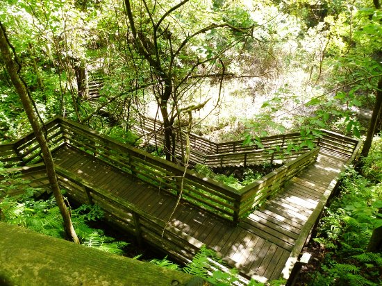 Gainesville, FL: Devil's Millhopper Geological State Park