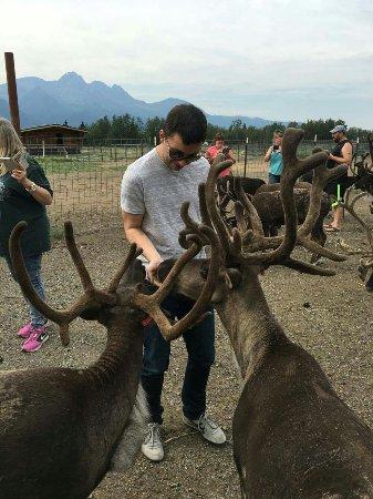Reindeer Farm: received_10157210158380531_large.jpg