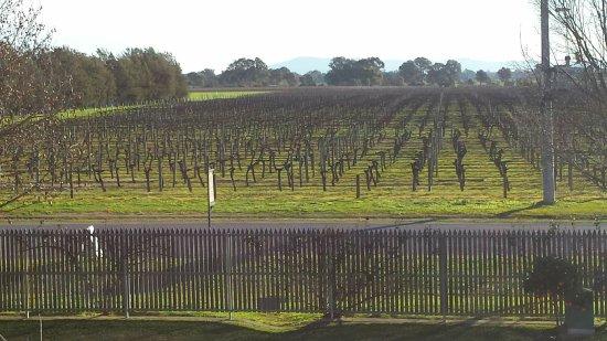 Milawa, Australien: Vineyard views