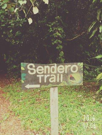 Casitas Tenorio B&B: Sentier menant vers le boisé