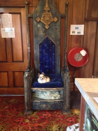 TripInn Hostel, YHA Westport: The tiny dog in the massive chair, sorry about the blur I was too excited to hold the camera ste