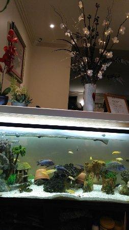 Milton Chinese Restaurant
