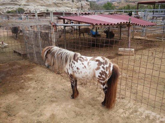 Dreams of Horses Farm: fashionista