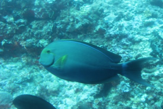 Whale Submarine Maldives: fishhh