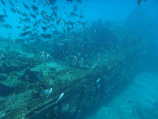 Christchurch, Barbados: Muita vida marinha